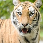 Visit the largest zoo in the US, the Bronx Zoo
