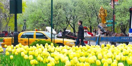 saison-printemps-nyc