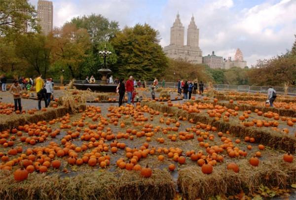 Central-Park-Pumpkin-Festival-600x406