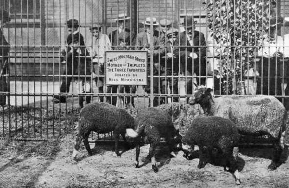 Zoo-Central-Park-NY-1934
