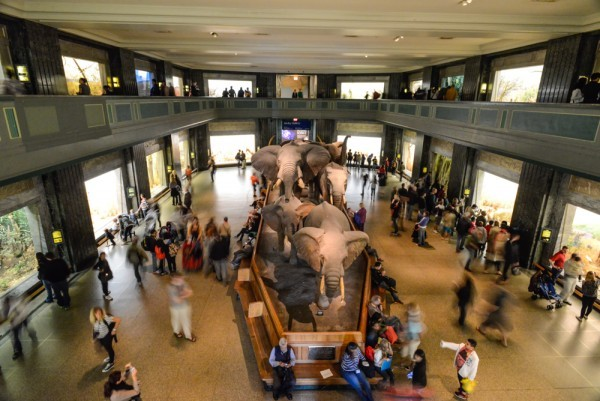American-Museum-of-Natural-History-AMNH-NYCTT