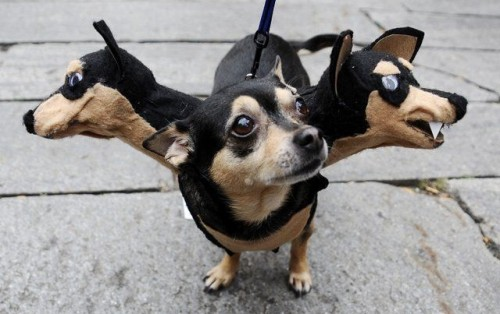 10-three-headed-dog-costume-e1304086810257